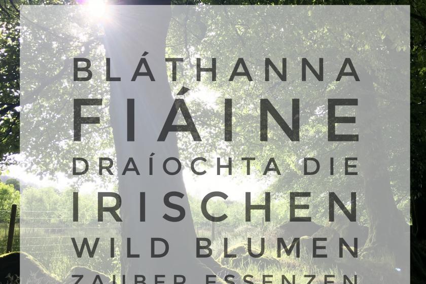Bláthanna Fiáine Draíochta – Die irischen Wild Blumen Zauber Essenzen
