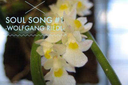 Soul Song Essenzen Trilogie – Integration deiner Seele –
