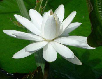 Jane Bell´s Hawaii Blütenessenzen -> Trio des Monat