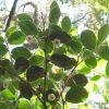 black bark flowers