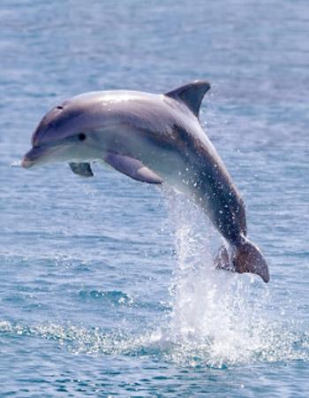 dolphin_blesings-350×450