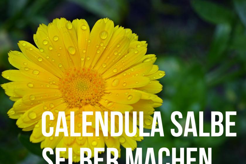 Calendula Creme mit Honig selber machen
