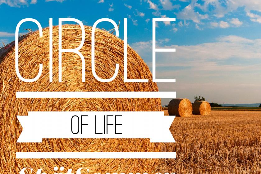 Circle of Life – eine Yin Yoga Reise durch die Jahreszeiten – Der Spätsommer