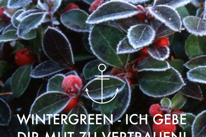"""Ätherisches Öl Porträt – Wintergrün – """"Ich gebe Dir Mut zu vertrauen!"""""""