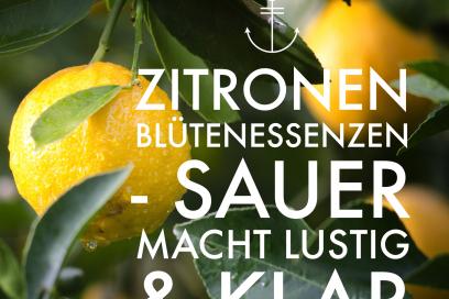 Sauer macht lustig & klar – die Zitronen-Blütenessenz