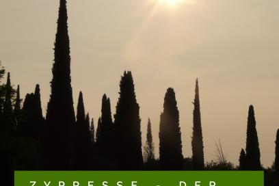 Ätherisches Öl Porträt – Das Zypressenöl – Der Fluss des Lebens