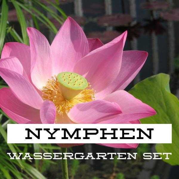 Nymphen Wassergarten Set
