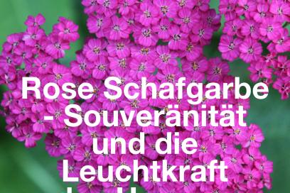 Rosa Schafgarbe – Die Souveränität und die Leuchtkraft des Herzens