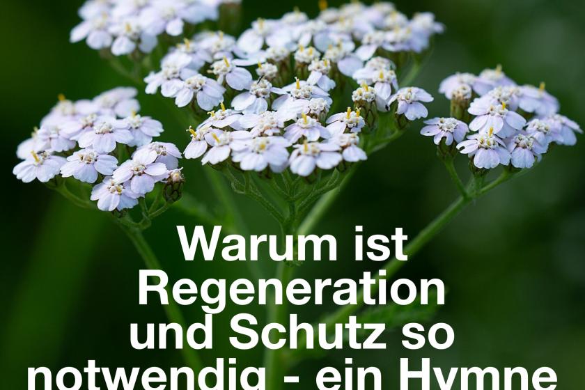 Warum ist Regeneration und Schutz so notwendig – ein Hymne an die weiße Scharfgabe