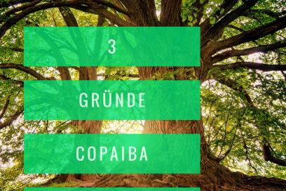 3 Gründe das ätherische Öl Copaiba anzuwenden mit Roll On Rezept