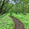 Wald Storchschnabel 2