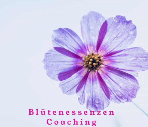 Blütenessenzen Coaching 1h