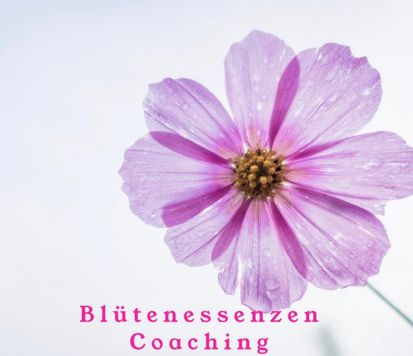 Blütenessenzen Coaching