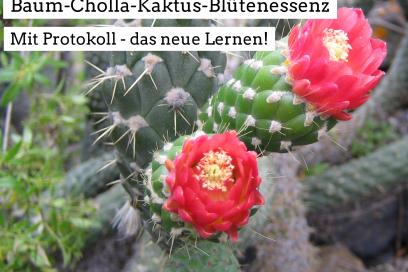 Baum-Cholla-Kaktus-Blütenessenz und Protokoll – das neue Lernen!