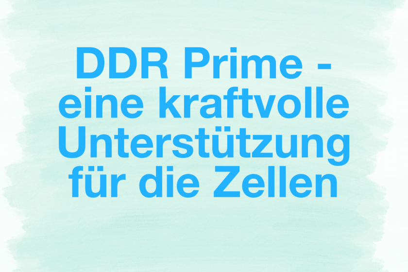 DDR Prime – eine kraftvolle Unterstützung für die Zellen