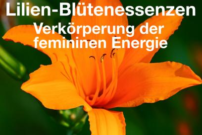 Lilien Blütenessenzen – Verkörperung der femininen Energie