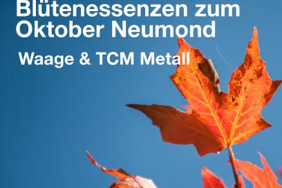 Blütenessenzen zum Neumond 6.Oktober 2021 – Waage und TCM Metall